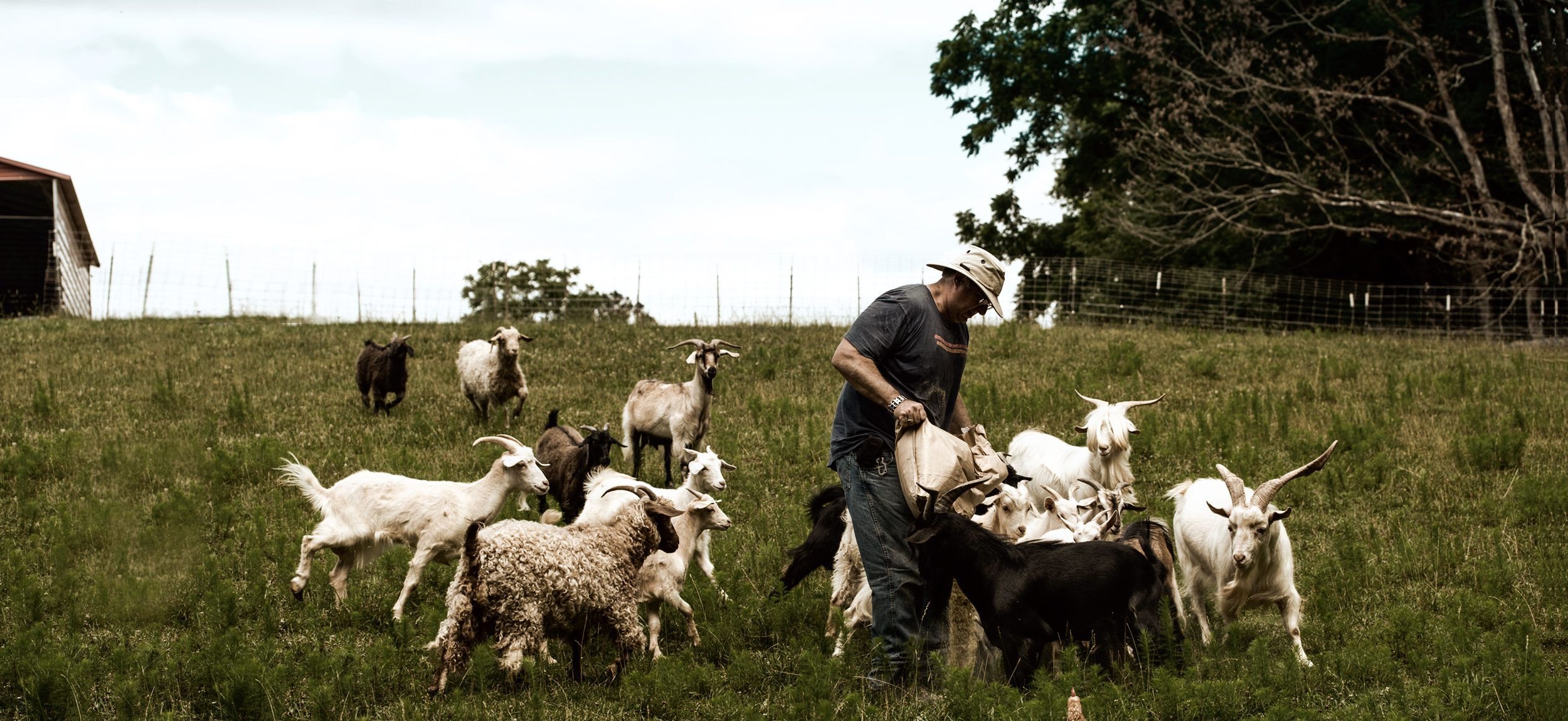 WhyNot Farm Pastured Breeds