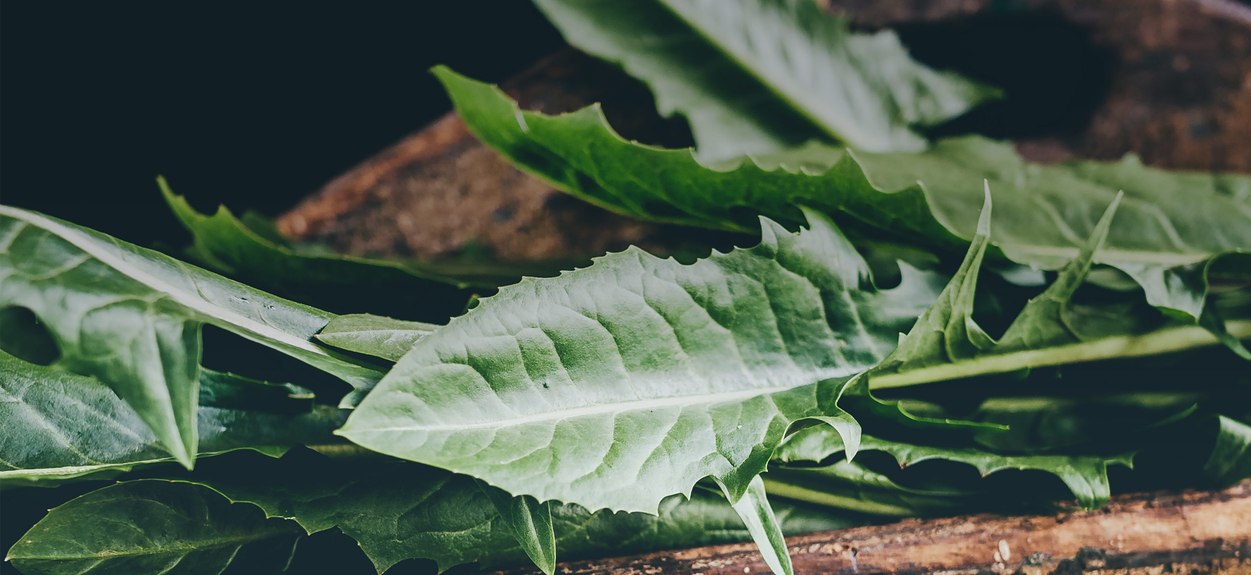Hydroponics Produce at WhyNot Farms